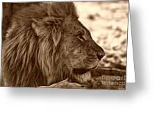 lion of Chobe Greeting Card