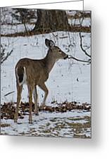 Little White Tail On The Move Greeting Card