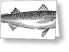 Mackerel Greeting Card