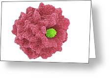 Macrophage Engulfing Pathogen, Artwork Greeting Card