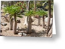 Madagascar Palms Greeting Card