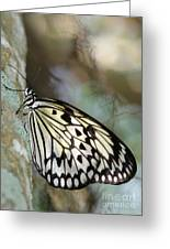 Magical Butterfly Greeting Card