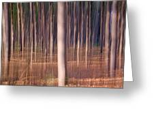 Magical Forest At Sunset Greeting Card