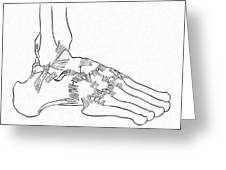 Major Ligaments Of The Foot Greeting Card