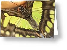 Malachite Greeting Card