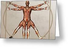 Male Musculature, Artwork Greeting Card