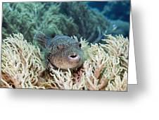 Map Pufferfish Greeting Card