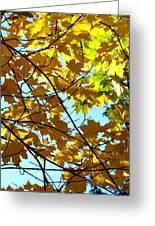 Maple Leaf Canopy Greeting Card