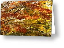 Maple Tree Foliage Greeting Card