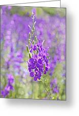 Meadow Of Violets  Greeting Card by Kantilal Patel