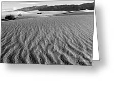 Mesquite Dunes 15 Greeting Card