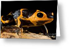 Mimic Poison Frog Greeting Card