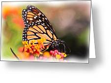 Monarch And Milkweed Greeting Card