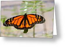 Monarch Majesty Greeting Card
