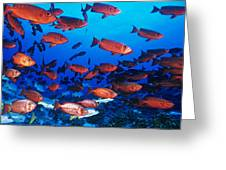 Moontail Bullseye Fish Greeting Card