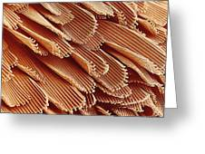 Mosquito Body Surface, Sem Greeting Card