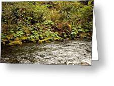 Mossy Riverbank Greeting Card