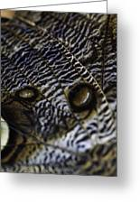 Mournful Owl Butterfly Greeting Card