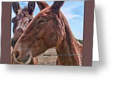 Mule Wink Greeting Card