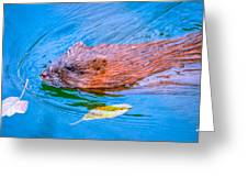 Muskrat Greeting Card