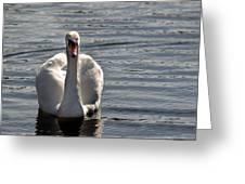 Mute Swan Greeting Card