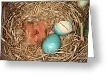 Newborn Robin Nestlings Greeting Card