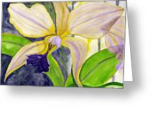 No Ordinary Orchid Greeting Card