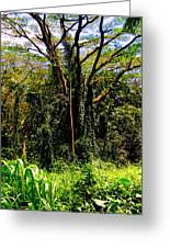 Oahu Rainforest Greeting Card