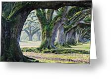 Old Growth Trees Greeting Card by Jeremy Woodhouse