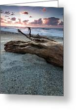 Old Tree Trunk On A Beach  Greeting Card