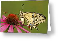 Oldworld Swallowtail Papilio Machaon Greeting Card