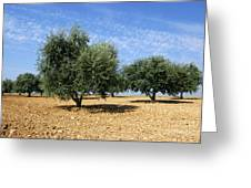Olives Tree In Provence Greeting Card