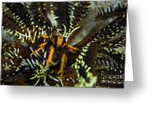 Orange And Brown Elegant Squat Lobster Greeting Card