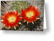 Orange Cactus Flowers Greeting Card