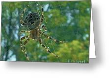 Orb Spider      Summer           Indiana Greeting Card