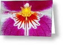Orchid Closeup Greeting Card