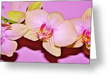 Orchid Love Greeting Card