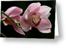 Orchid's  Mystery Greeting Card by Valia Bradshaw