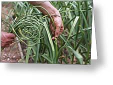 Organic Serpent Garlic Greeting Card