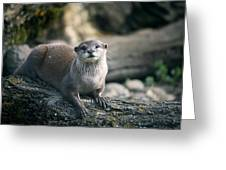 Oriental Small-clawed Otter Greeting Card