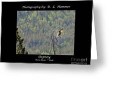 Osprey Greeting Card