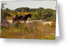 Outer Banks Horses Greeting Card