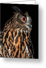 Side Portrait Of An Eagle Owl Greeting Card