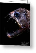 Pacific Viperfish Greeting Card