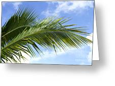 Palm  Greeting Card by Blink Images