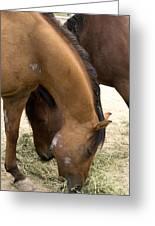 Parallel Ponies Greeting Card