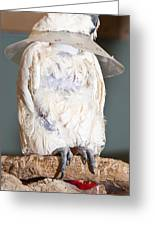 Parrot White Greeting Card