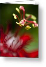 Passiflora Flower Greeting Card