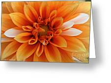 Peach Petals Greeting Card