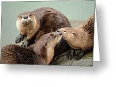 Pelican Creek Otter Family Greeting Card